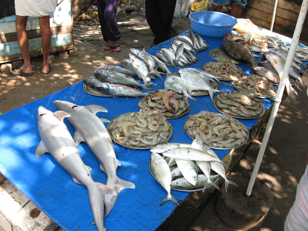 1223 25 kerala fort cochin fish market peter flickr for White fish market