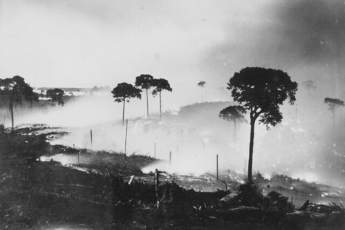 Night photograph of tree burning to clear the land at Fordlandia, ca. 1929. | by The Henry Ford
