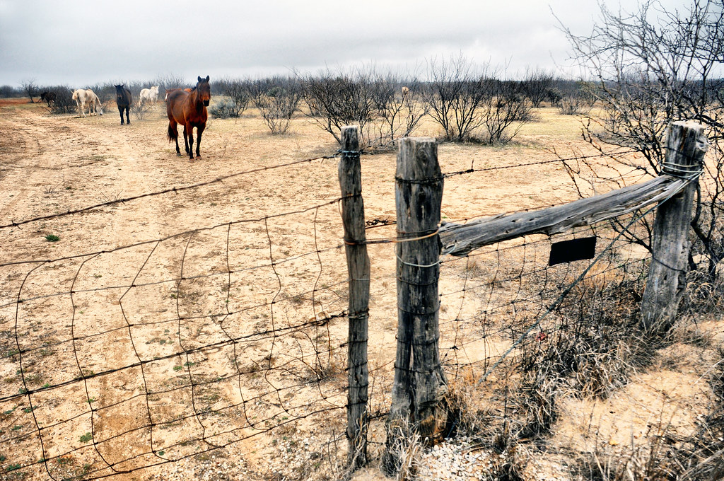 Wild Horses Ranch Texas Barbed Wire Fence Gate Wood Posts … | Flickr