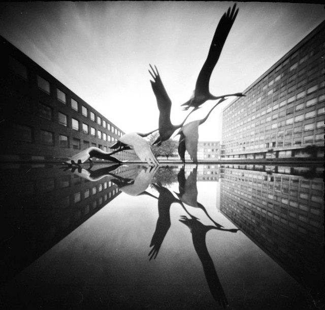 Picture This Photography And Graphics: Pinhole Newcastle Civic Centre