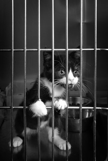 Jail Kitty | by phphoto2010