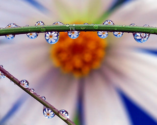petal pearls | by Steve took it