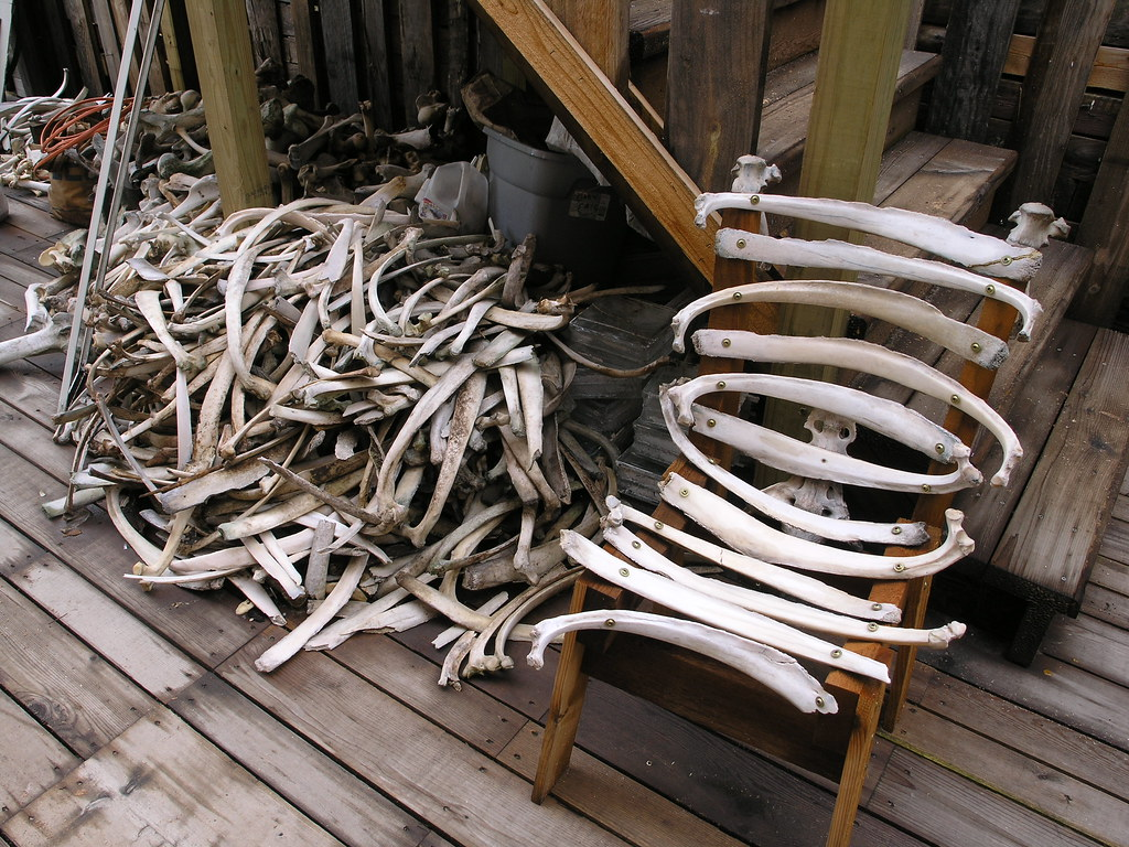 Ordinaire ... Bone Furniture And More Bones | By Phoenix Commotion