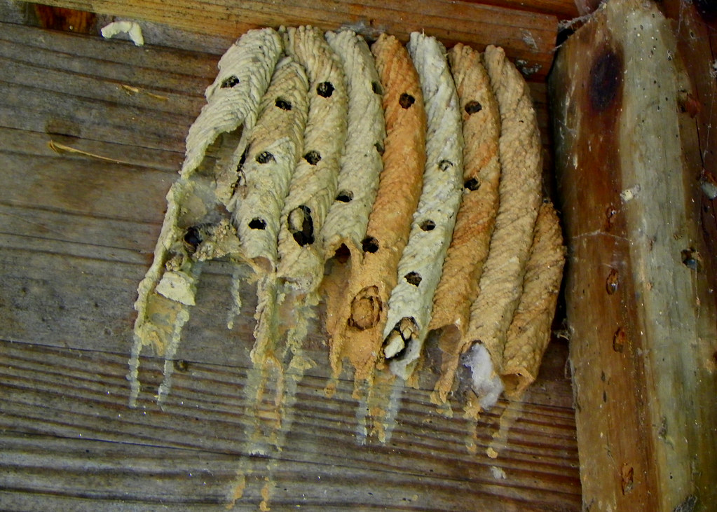Inspecting Homes for Termites