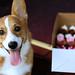 Sookie + Cupcakes