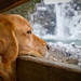 Snoqualmie Falls...Frozen