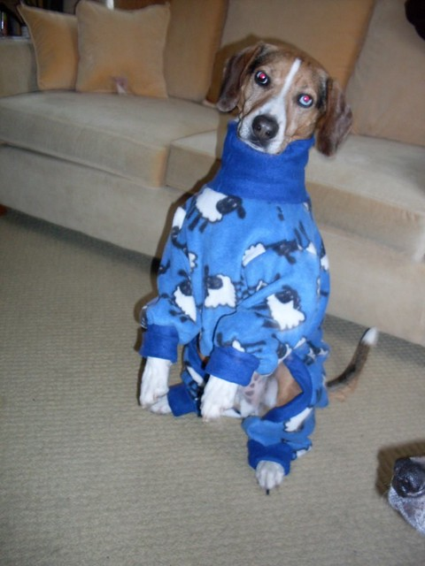 Dog Pajamas For Hot Weather