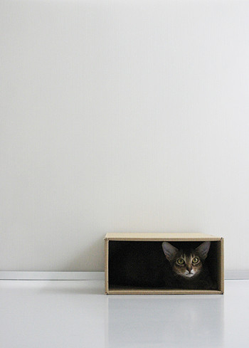 Minimalism_cat_6937 | by y_and_r_d