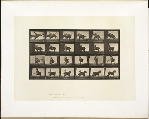 Animal locomotion. Plate 661 | by Boston Public Library