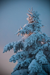 RandomSnowStuff-1 | by static-photo