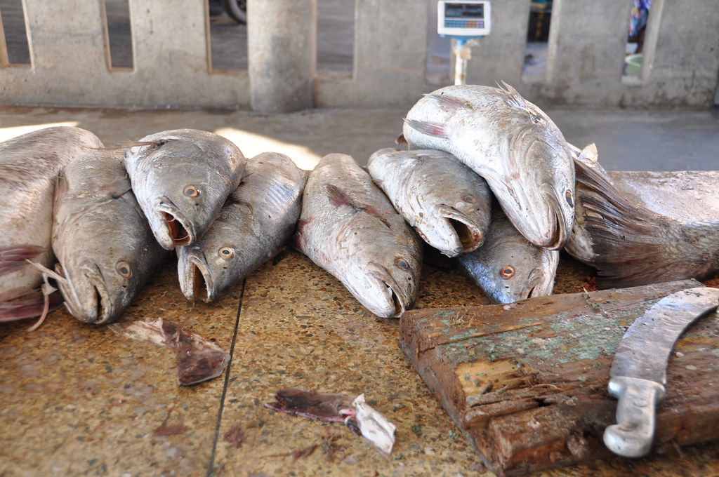 Nouakchott fish market peter gostelow flickr for White fish market