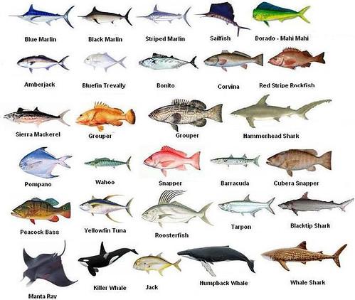 как по-английски ловил рыбу