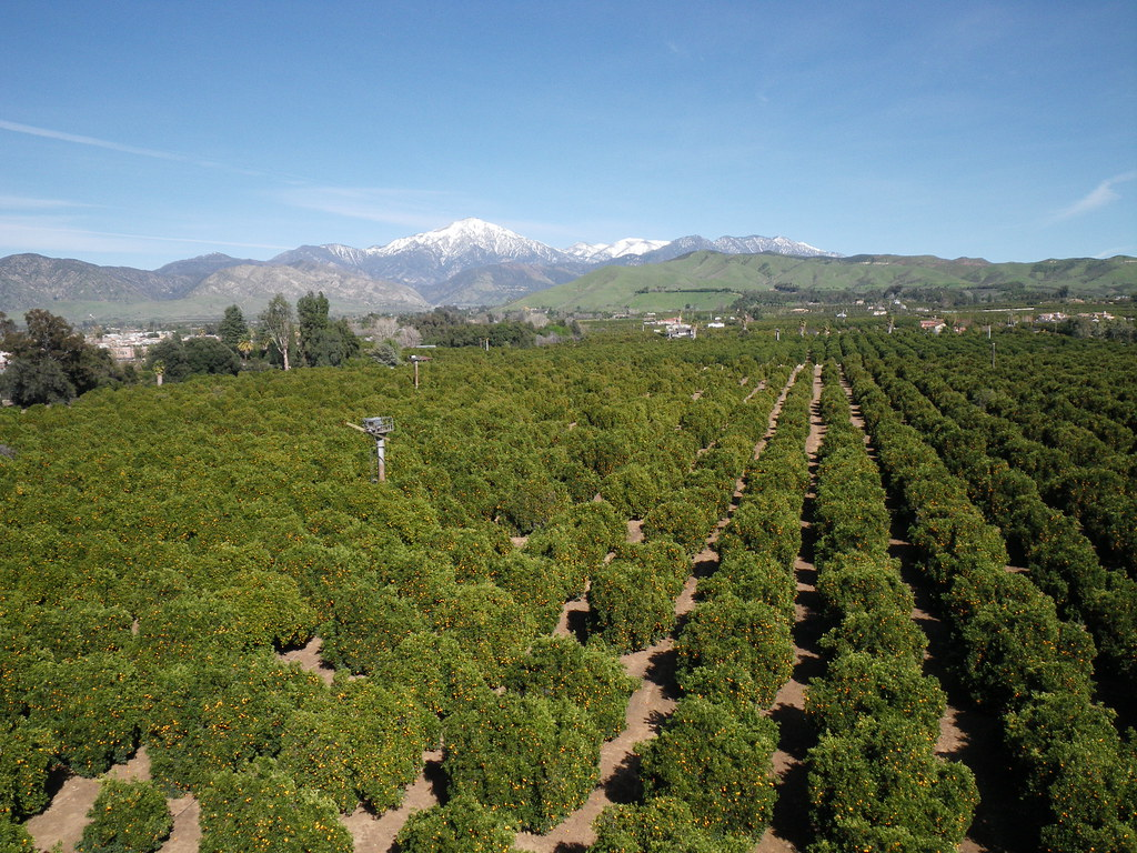 orange grove online dating If you want to impress your guests with high standard food, fabulous thematic setup and pleasant service but still be able to protect your pocket, orange clove is a.