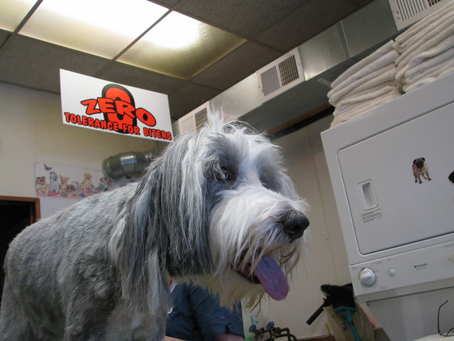 Mobile Dog Grooming North Shore Ma