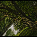 Tree Vantage