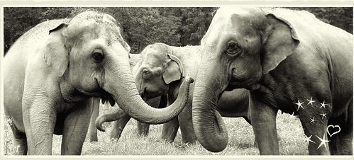The Elephant Sanctuary | by Discover Tennessee Trails & Byways
