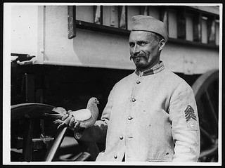 Franco-British carrier pigeon which makes long distance flights | by National Library of Scotland