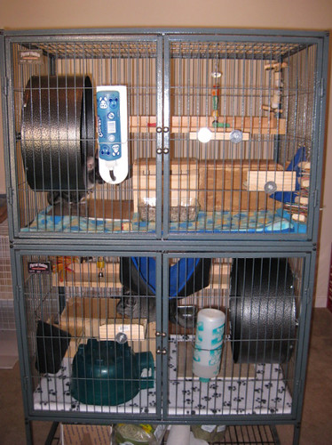 Newest Chinchilla Cage - Ferret Nation | My old cage had