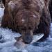 Alaska-July2009-4595