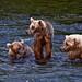 Alaska-July2009-6083