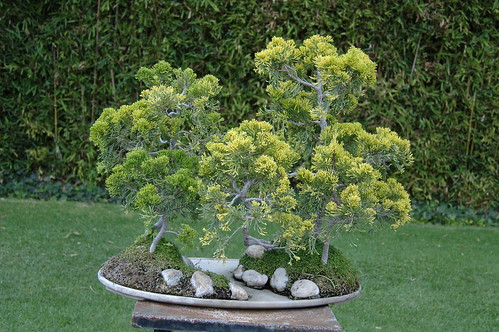 Bonsai | by ptorresmx