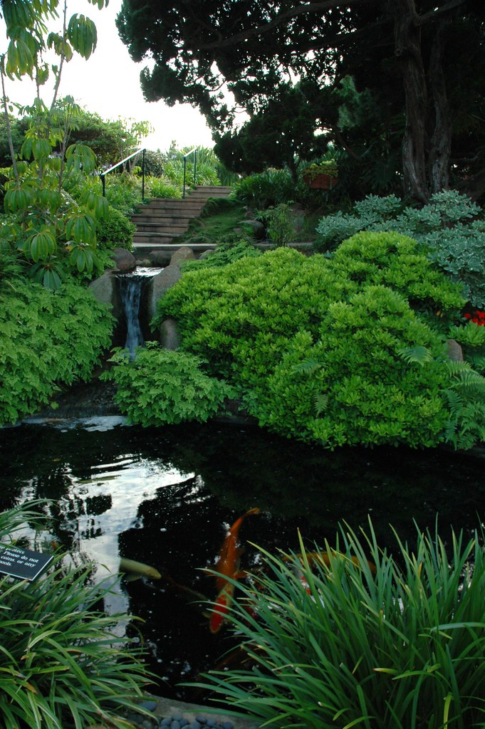 Koi Pond And Little Waterfall Deep In The Self Realization Flickr