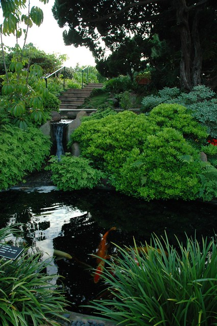 Koi Pond And Little Waterfall Deep In The Self Realization Fellowship Meditation Garden