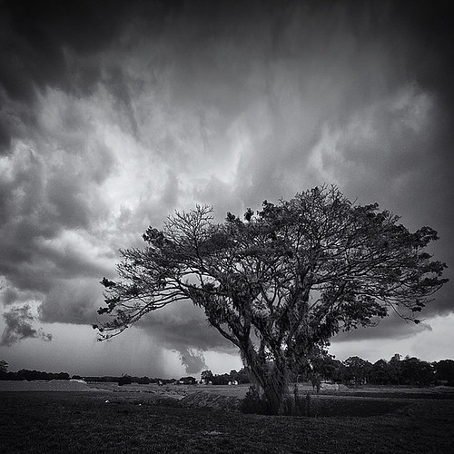 * tree VI * | by ^soulfly