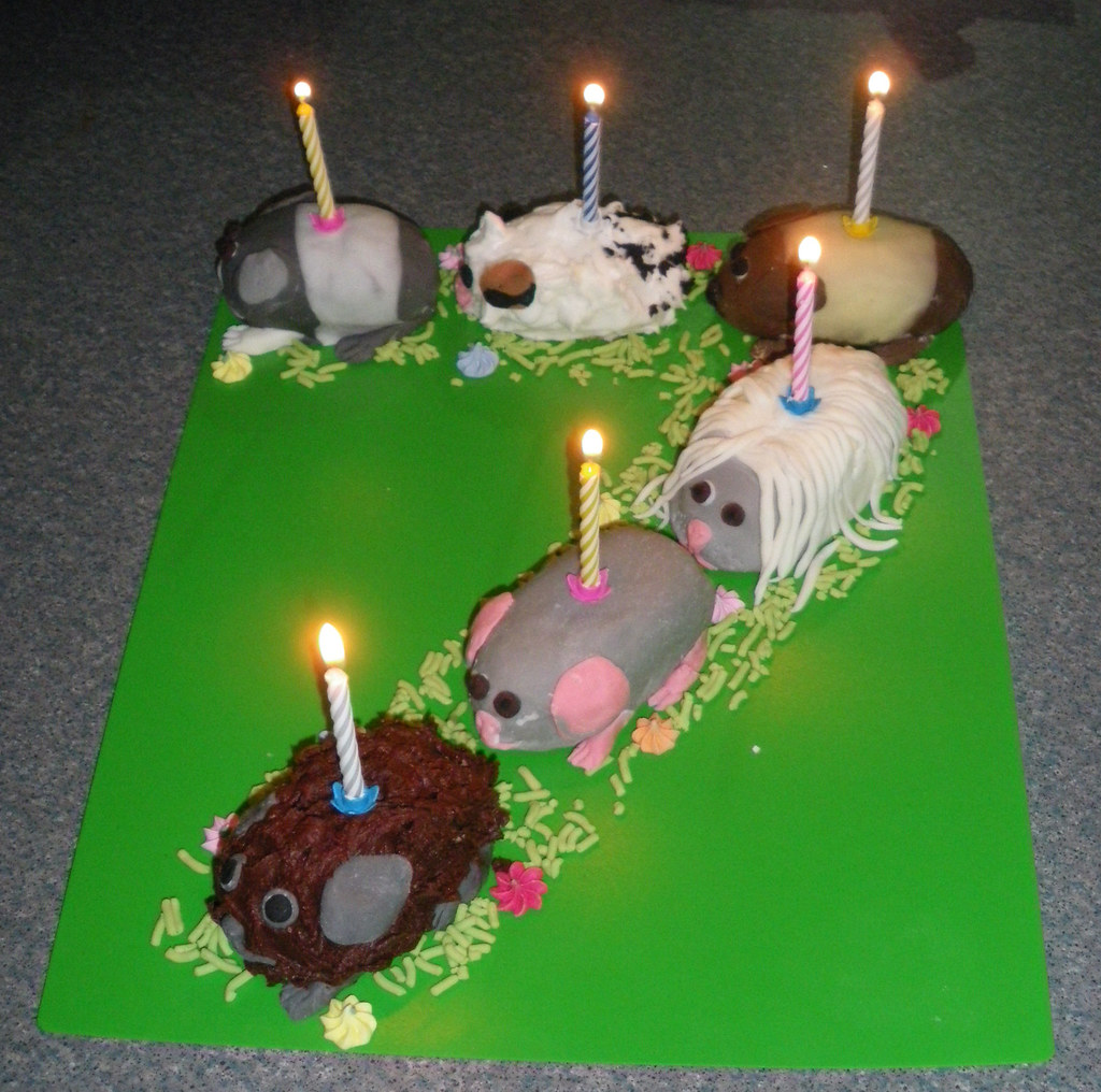 Cake Design For 7th Birthday Girl : Guinea Pig Cake 7 marc e marc Flickr