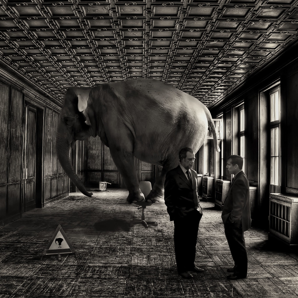 White Elephant In The Room Meaning