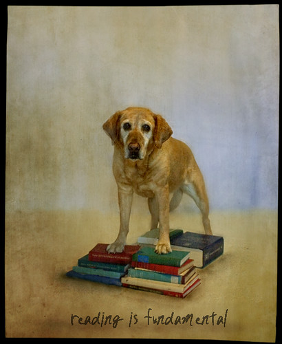 reading is fundamental | by jamie heiden