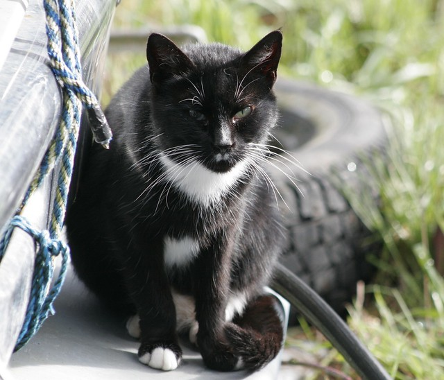Cat Mustache White Background