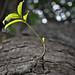 Tree (save water, save life)