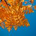 308/365 L'automne azuré