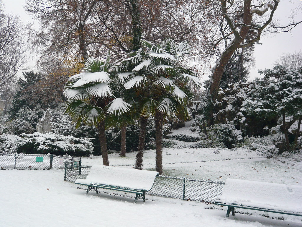 Palm Trees In The Snow Little Bench Under A Group Of
