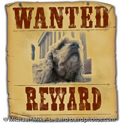 Buffy Baird in Wanted Poster format. | Buffy Baird in Wanted… | Flickr