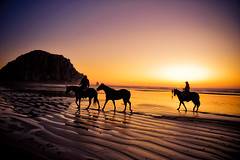 Morro Bay : Horses on the beach | by tibchris