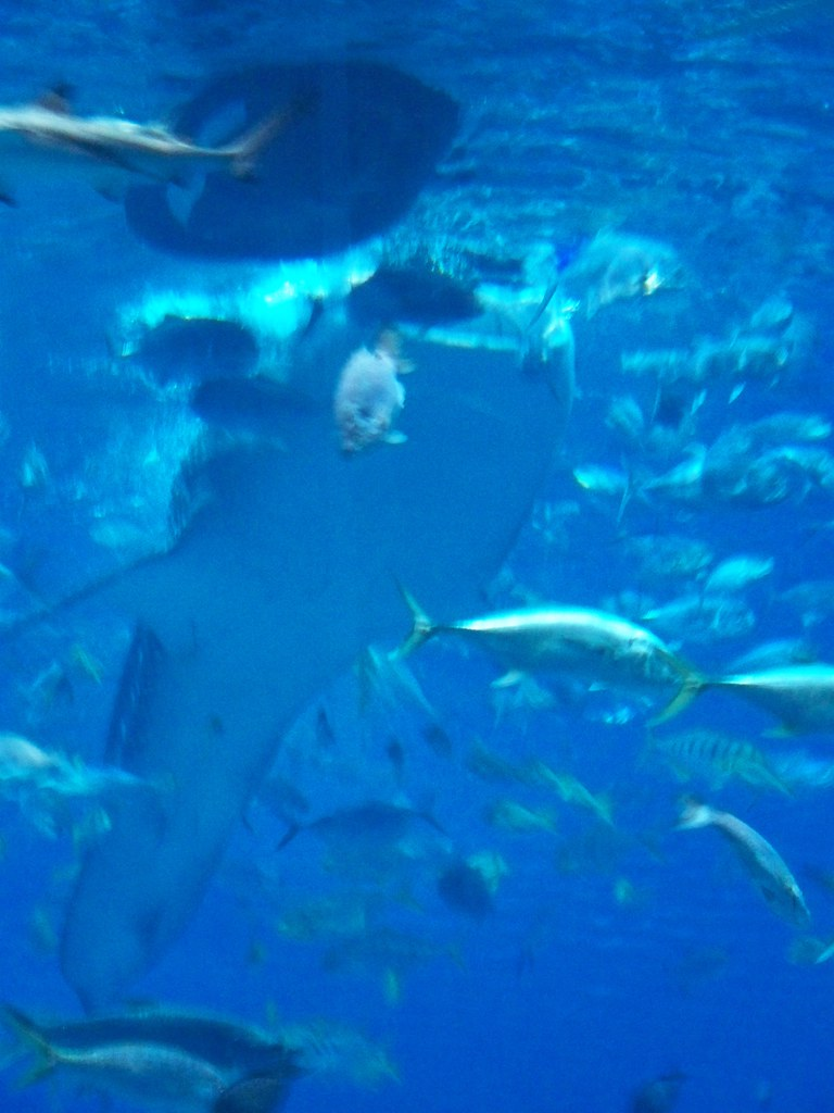 Image Result For Aquarium In Atlanta