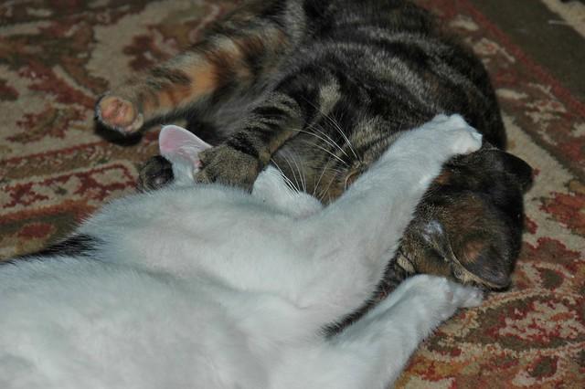 Greco-Roman Cat Wrestling