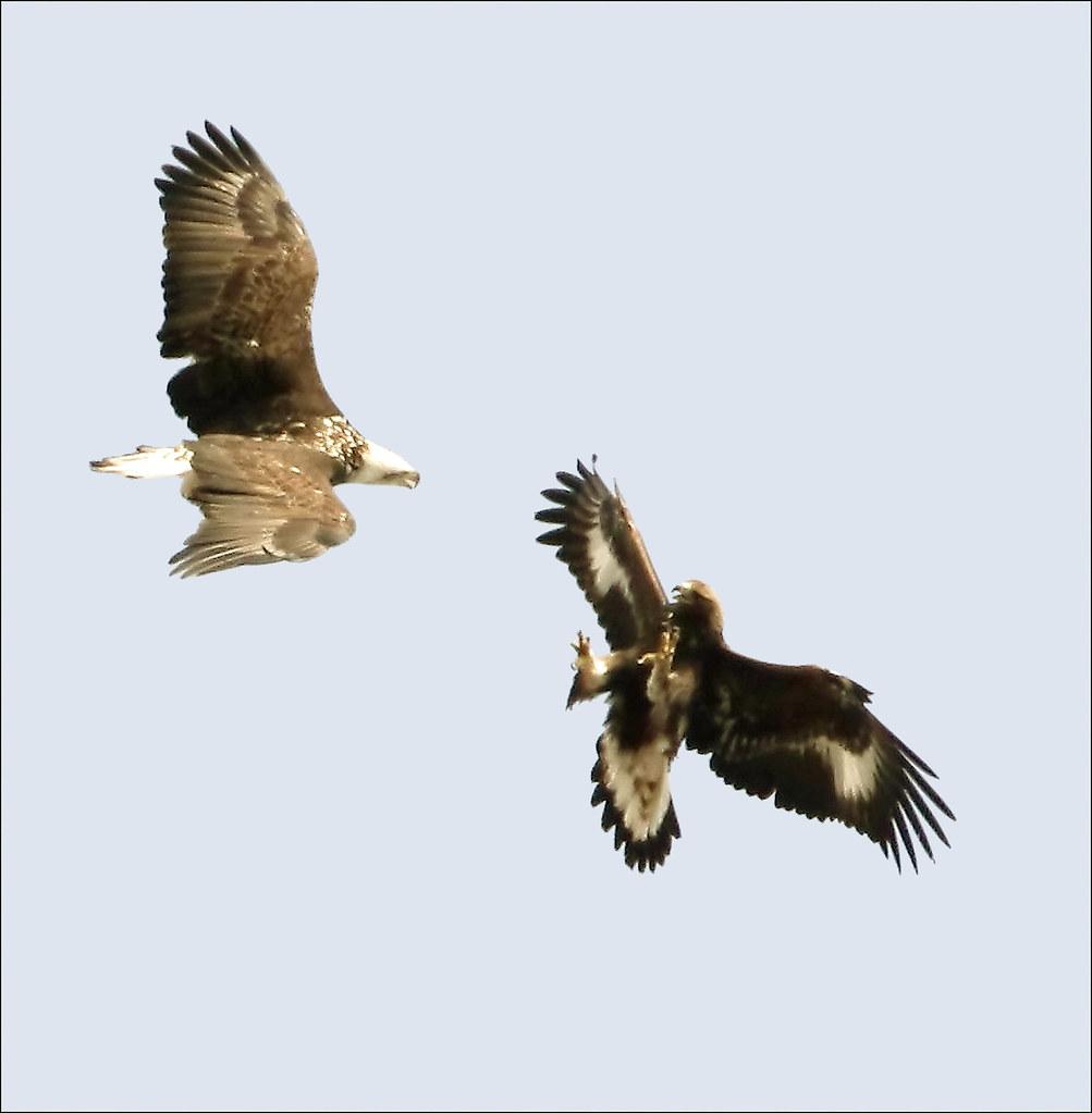 Golden Eagle Cir Palm Beach Gardens Fl  Usa