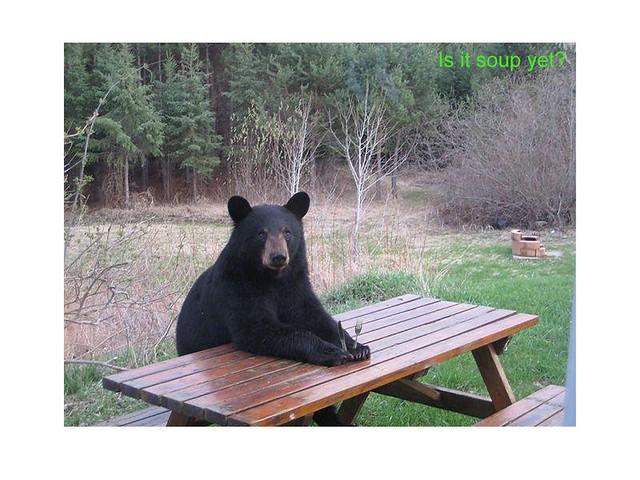 ... Bear At Picnic Table | By Boondocking