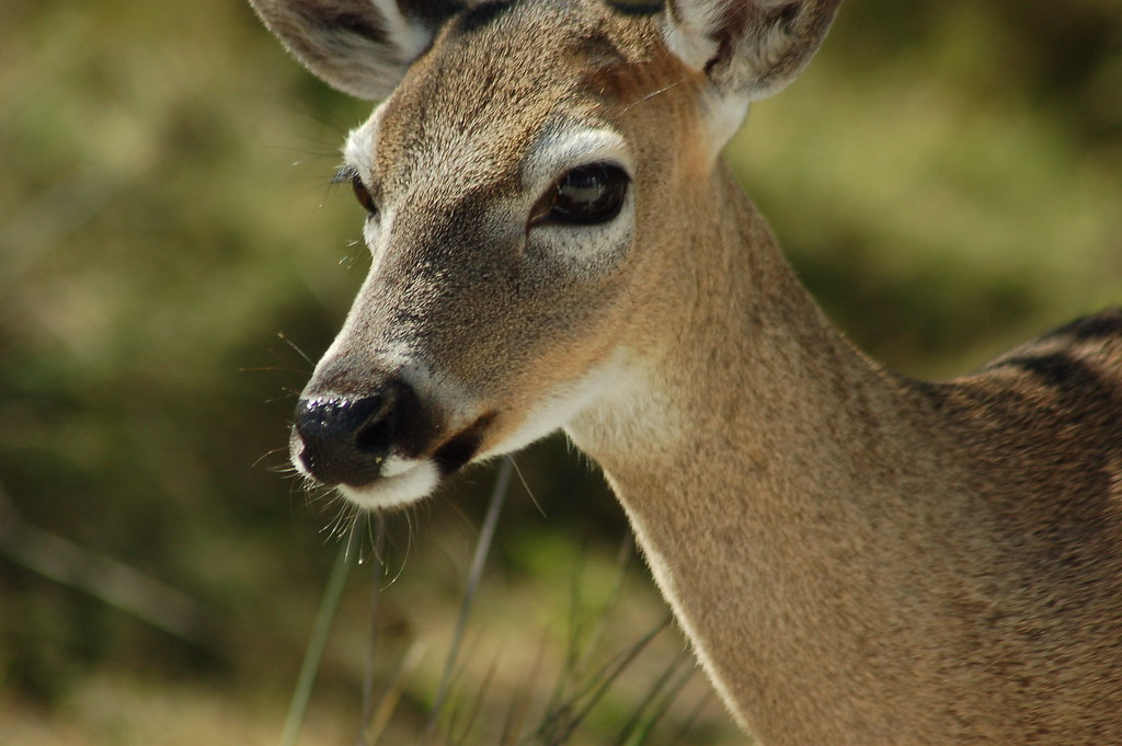 Like A Deer In The Headlights Kid Rock