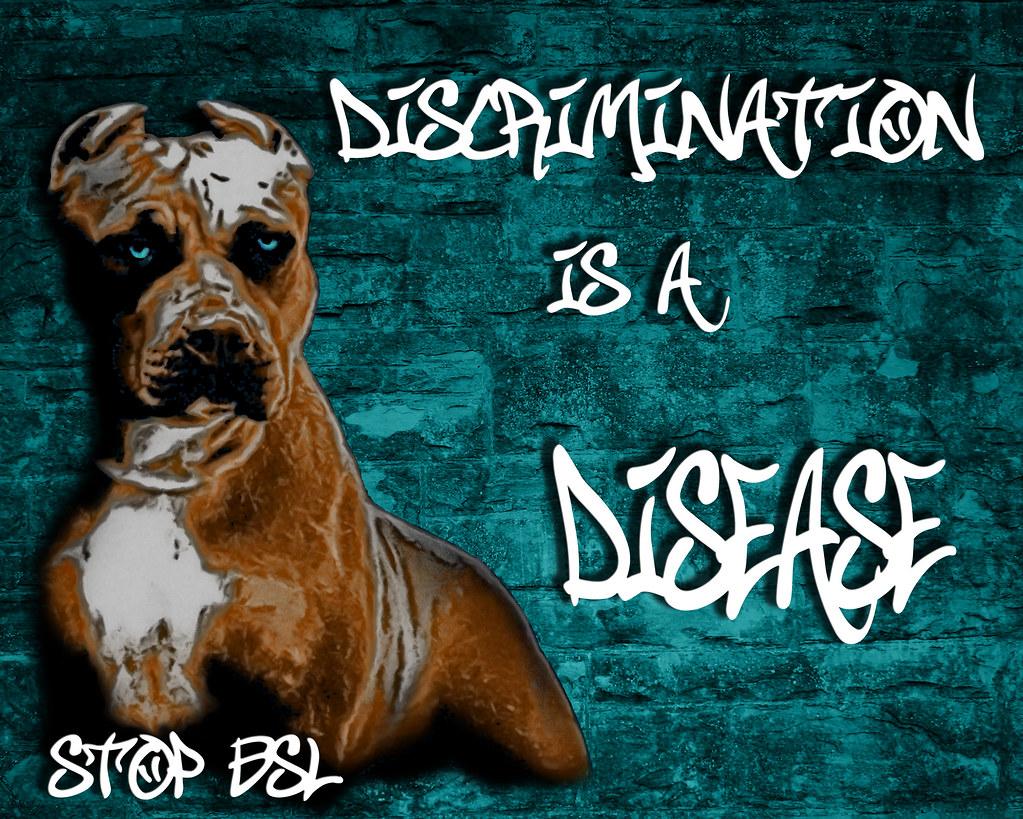 American Pitbull Terrier Dog Portrait Graffiti On Brick W