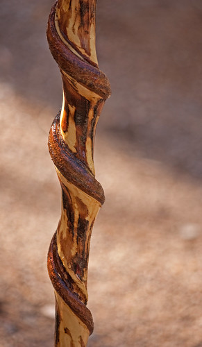 Twisted Walking Stick My Photo That I Submitted In The