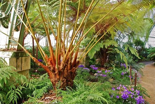 Parterre de fleurs et palmiers stephane mignon flickr for Parterre 3d