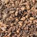 Cashew shells in Guinea Bissau