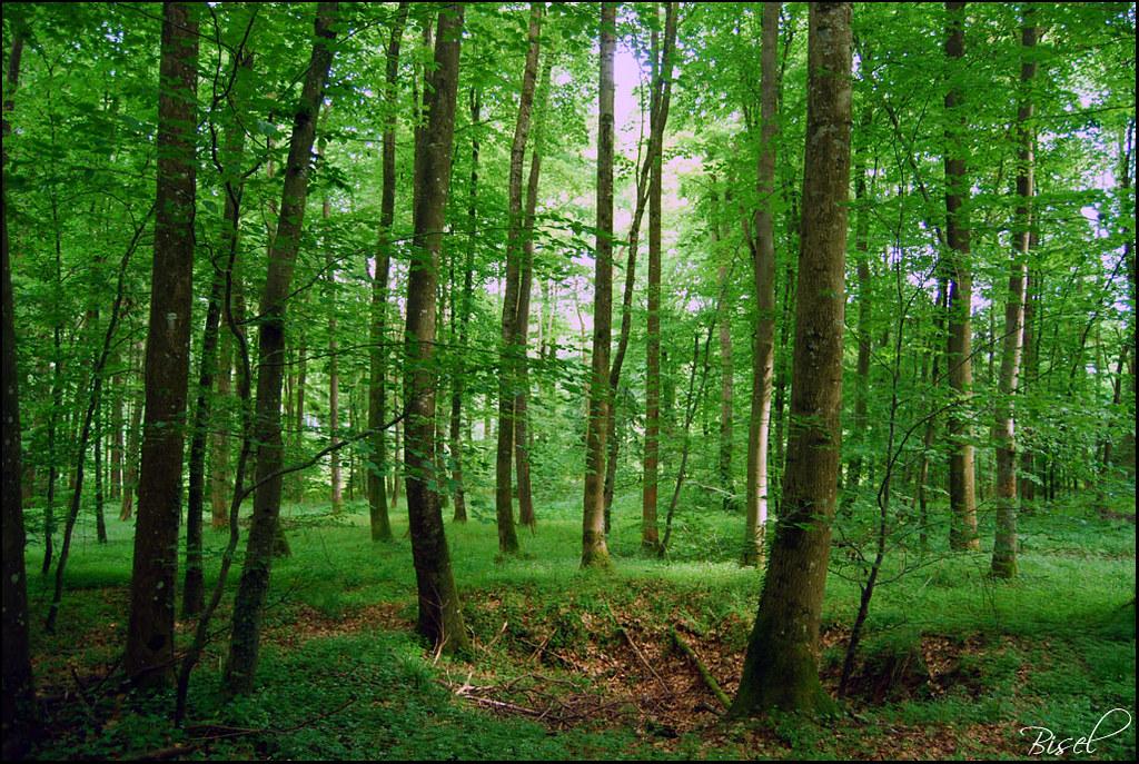 Dans les bois vers bisel julien sabardu flickr for Vers dans le bois