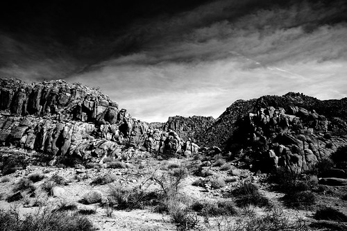 Joshua Tree 1 ( Explored ) | by -william