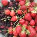 Backyard Berry Harvest May 2010