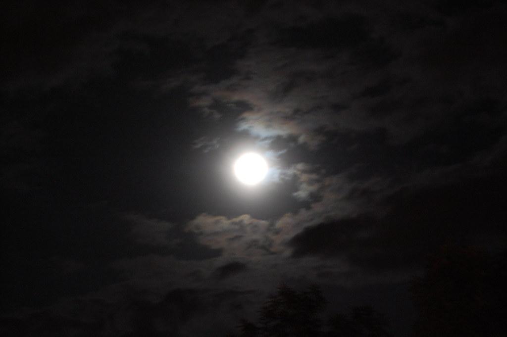 Dama de noche una buena nalga - 4 4